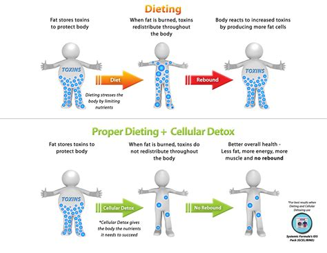 Are Detox Cleanses Safe For Wernicke S Patients by Dieting And Detox How To Lose Toxic For