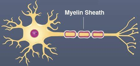 n acetylaspartate supplement top 55 ways to increase myelin naturally and surprising