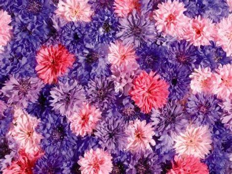any design of flowers blomst mosaikk gratis skrivebord bakgrunner 9988