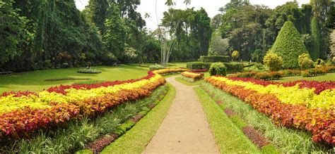 Peradeniya Botanical Garden Beautiful Places In Kandy Peradeniya Botanical Garden Kandy