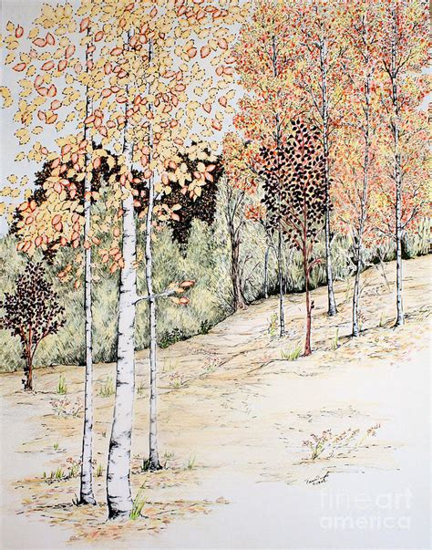 aspen tree drawings fall aspen trees drawing by tammie temple