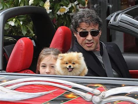 what are pomeranians known for pomeranian sylvester stallone sylvester stallone pomeranians and