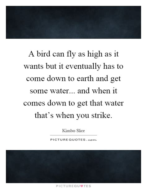 a bird can fly as high as it wants but it eventually has