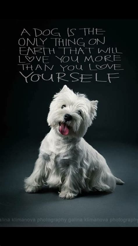 images   westie love   pinterest white terrier puppys  westie dog