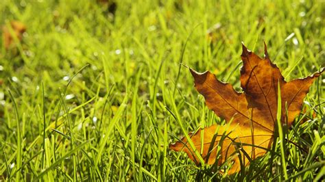 ehlinger lawn service fall lawn care tips part 2
