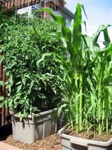 Self Watering Containers Vegetable Garden