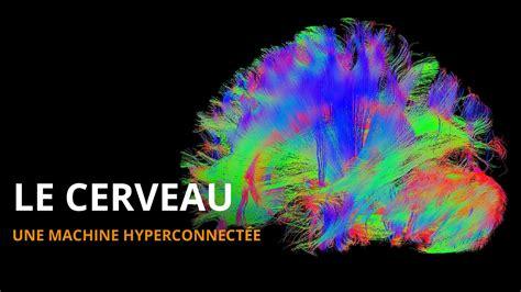 le les comment fonctionne le cerveau l esprit sorcier