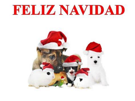 imagenes de animales navidad im 225 genes de navidad im 225 genes de navidad animales