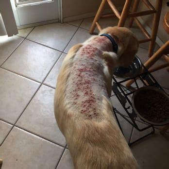razor burn on dogs flawless pet grooming school salon 20 photos 26 reviews pet groomers 1512