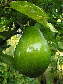 Bibit Alpukat California florida lime avocado growers inc v paul