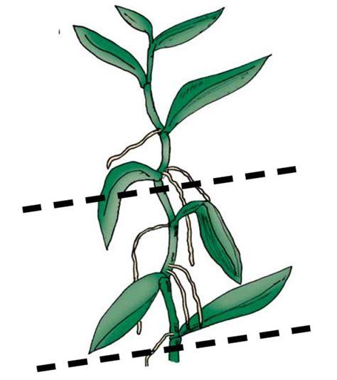 Come Bagnare Orchidee by Orchidea 36 Cose Fondamentali Da Sapere Fai Da Te In