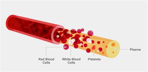 What Is It When Blood Is In Your Stool by Unyts Get The Facts