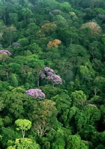 Rainforest Canopy Images by Tropical Rainforest Canopy Newsdesk