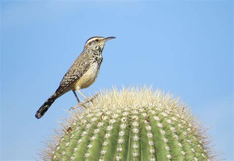 birding with butler exploring the sonoran desert in the