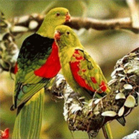 gif wallpaper birds hd wallpapers for desktop free beautiful animals birds
