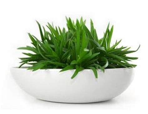 identify green house plants hunker