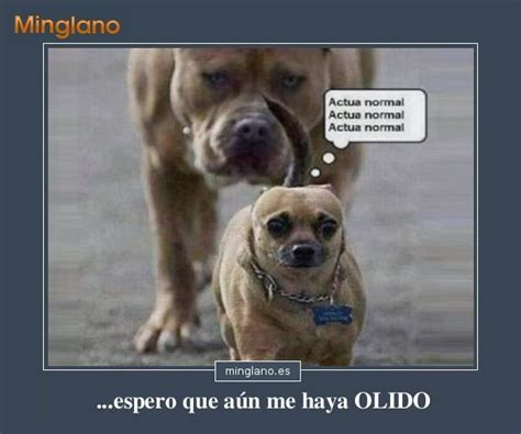imagenes graciosas de cumpleaños con animales im 193 genes de perros con frases divertidas