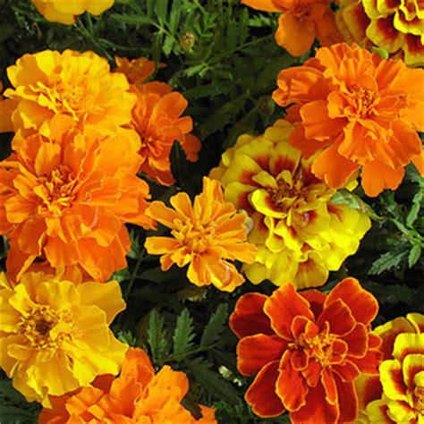 il colore dei fiori colore dei fiori invia fiori a domicilio
