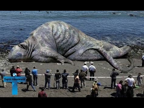 top 10 largest animals in the world ever recorded biggest