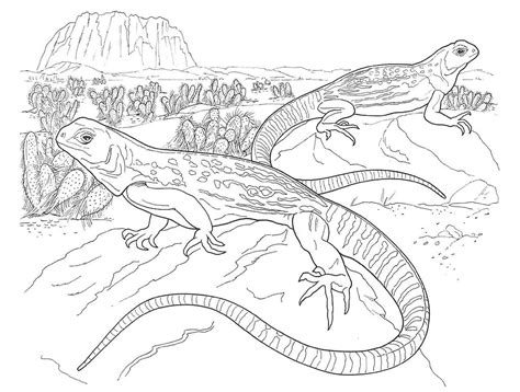 desert coloring pages to print coloring pages