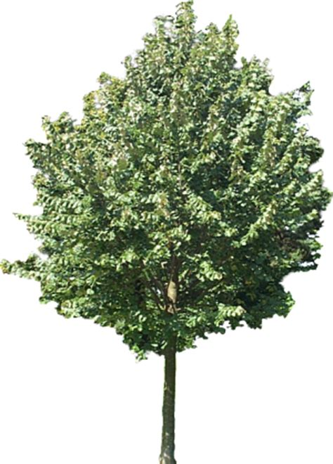 3d Drawing Software Free using plane textures for trees people etc in still