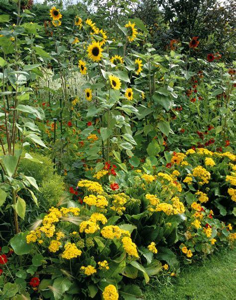 Yellow Garden Flowers 14 Cheerful Yellow Garden Flowers