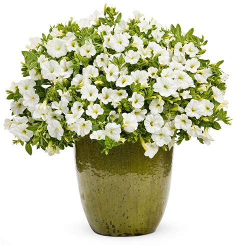 Best Place To Buy Flower Pots Flower Pots With Flowers Png Flower Pot Pla I Like This