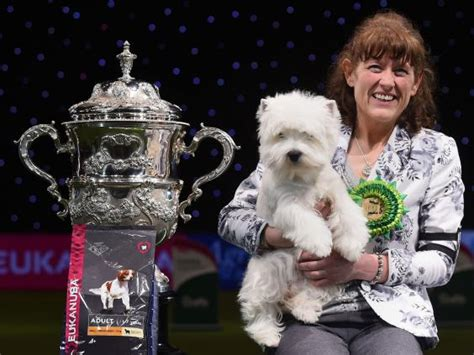Sho Best In Show crufts 2016 west highland terrier geordie wins