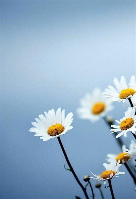 wallpaper iphone 7 flower natura e paesaggi 4 sfondi con effetto parallasse per