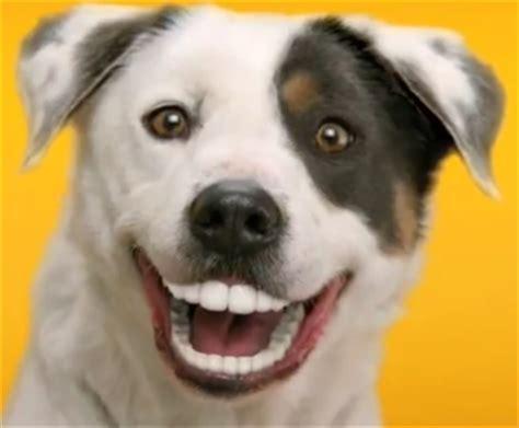 dogs with human teeth ridgehill animal hospital home
