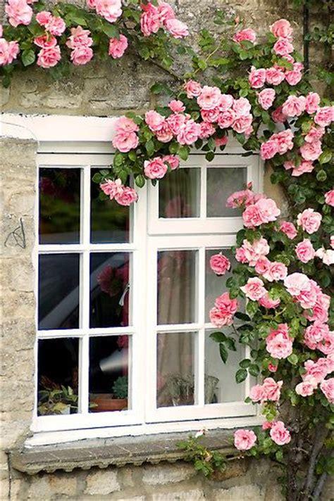 beautiful garden movie climbing roses gardens flowers pinterest
