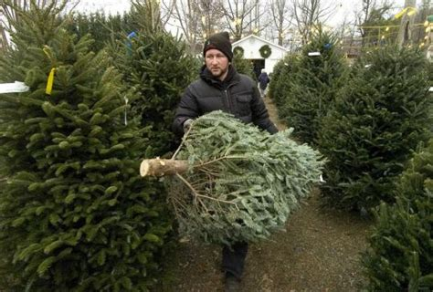 tips to keep your christmas tree fresh how to build a house