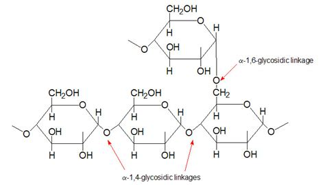 diagram of a polysaccharide carbohydrates the biology primer
