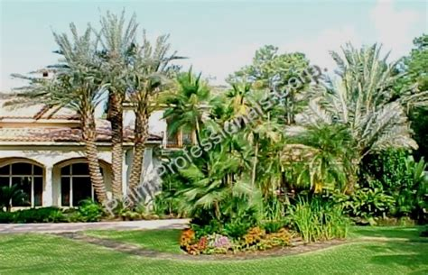 where to buy trees in houston medjool date palm trees for sale in houston buy