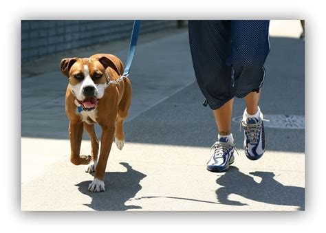 when can a puppy go outside for walks wellness pet food