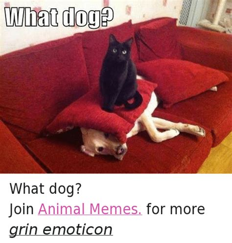 Frowning Dog Meme - 25 best memes about anime dogs and grumpy cat anime