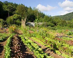 Garten Pflanzen Gute Nachbarn by Mischkultur Im Garten Pflanzen Nachbarschaft Gute Und