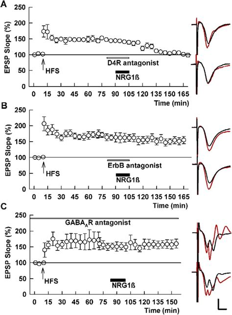 chemical induction of ltp neuregulin and dopamine d4 receptors contribute independently to depotentiation of