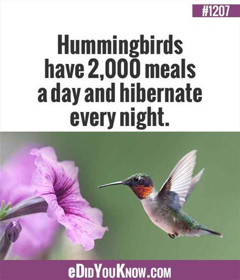 627 best animals images on pinterest fun facts random