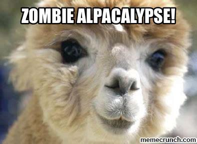 Alpaca Meme Generator - alpaca