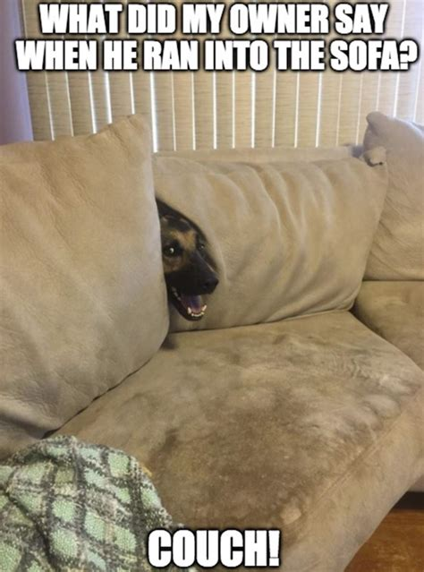 cat pooping on couch 30 funny animal captions part 56 30 pics amazing