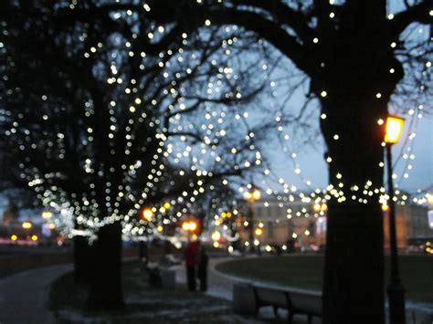 sure lit christmas tree lights 16 reasons you need to plant more trees revolutionary gardens