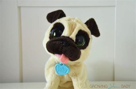 my jumpin pug pet jj my jumpin pug pet growing your baby growing your baby