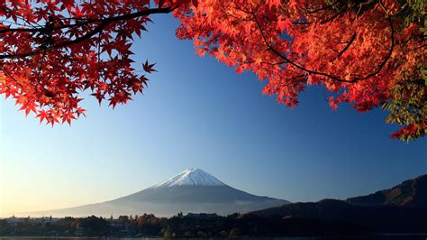 japan wallpaper hd iphone 6 mount fuji autumn maple japan wallpapers hd wallpapers