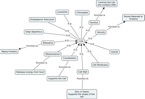 concept map cell nucleus becky concept map of cell