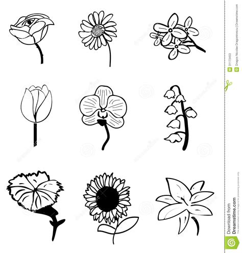 draw doodle flower flower sketches ink common everyday flowers