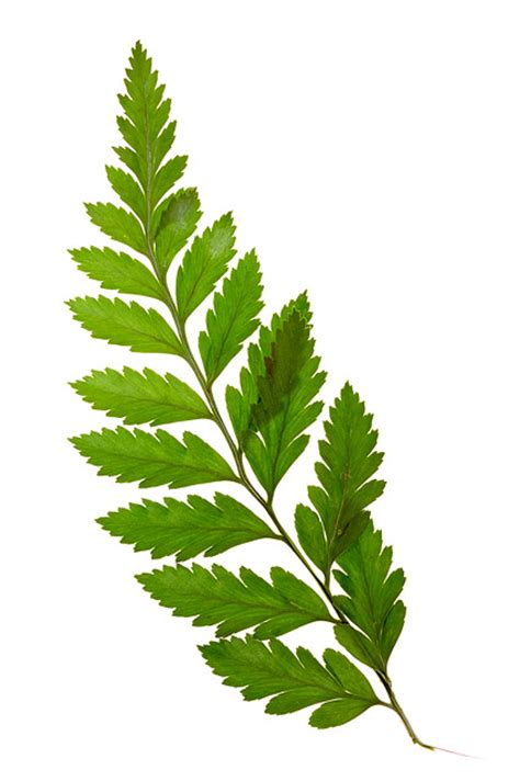 green leaves picture material download free vector psd