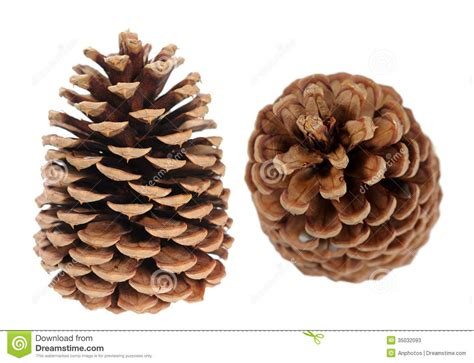 two pine cones stock photos image 35032093