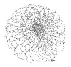 chrysanthemum limited edition ink drawing chrysanthemums