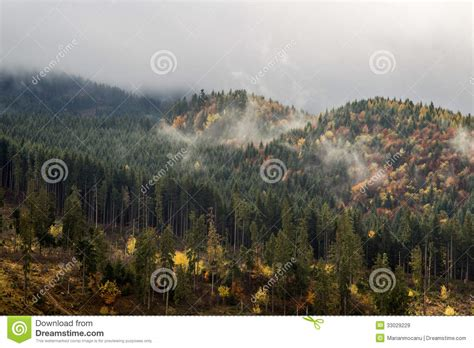 view of forest habitat royalty free stock photograph in fir forest stock image image of infrastructure cover